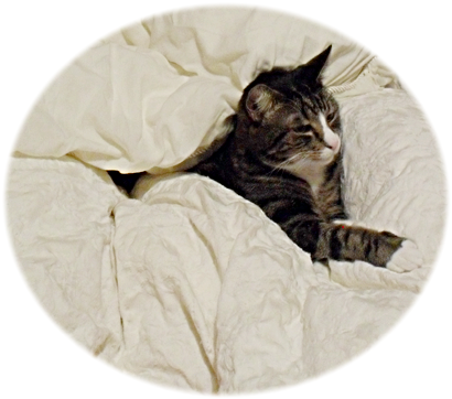 Stephen in bed - yes, he slept under the covers whether his owners wanted it or not...